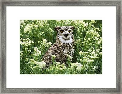 Great Horned Owl Framed Print by Jeffrey Lepore