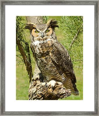 Great Horned Owl Framed Print by JRP Photography