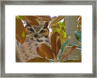 Framed Print featuring the photograph Great Horned Owl by Meghan at FireBonnet Art