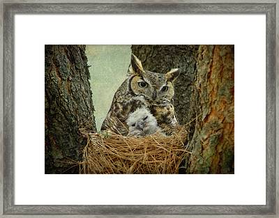Great Horned Owl Mom And Baby Framed Print by Cgander Photography