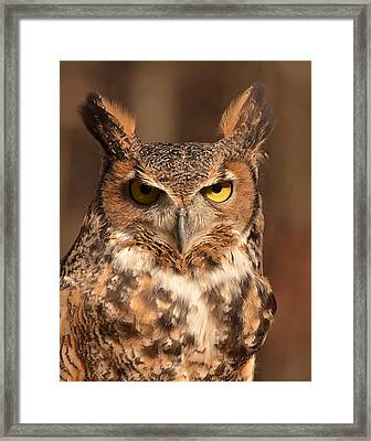 Great Horned Owl Framed Print by Nancy Landry