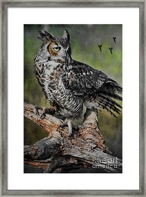 Great Horned Owl On Branch Framed Print by Deborah Benoit
