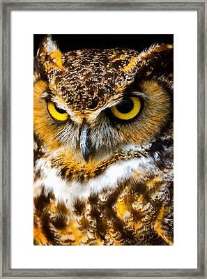 Great Horned Owl  Framed Print by Parker Cunningham