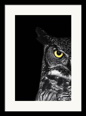 Great-horned Owls Framed Prints