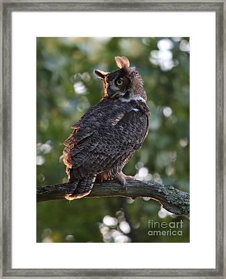 Great Horned Owl Profile Framed Print