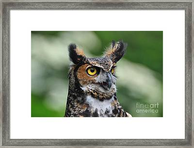 Great Horned Owl Framed Print by Suzanne Handel