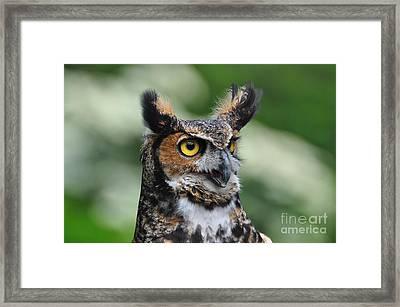 Great Horned Owl Framed Print