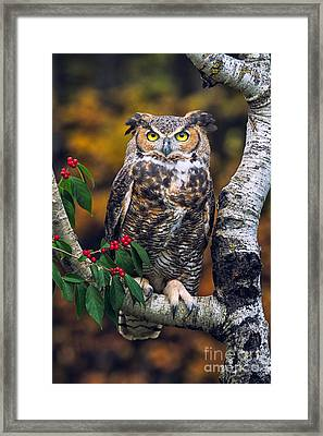 Great Horned Owl Framed Print by Todd Bielby