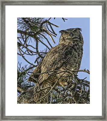 Great Horned Owl Framed Print by Tom Wilbert