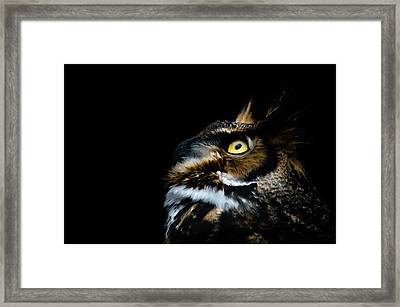 Great Horned Owl Framed Print by Tracy Munson