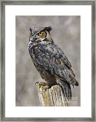 Great Horned Owl Watch Framed Print by Inspired Nature Photography Fine Art Photography