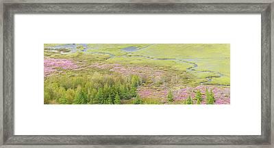 Great Meadow Flowers Blooming In Acadia National Park Framed Print