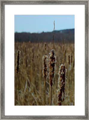 Great Meadows Framed Print by Jeff Heimlich