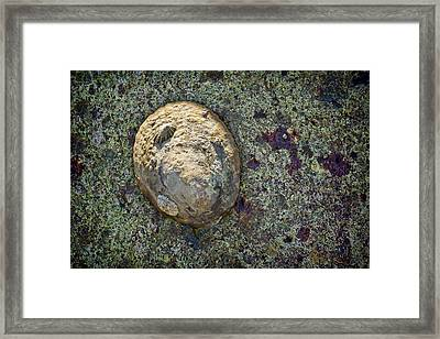 Great Owl Limpet Framed Print by Kelley King