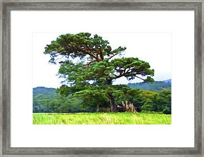 Great Pine Framed Print