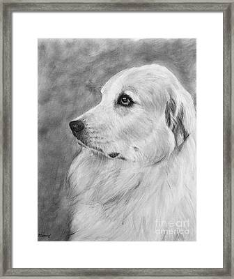 Great Pyrenees In Profile Drawing Framed Print