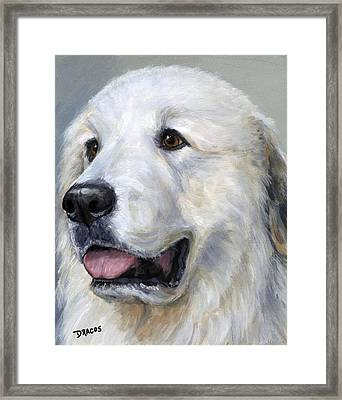 Great Pyrenees On Grey Framed Print by Dottie Dracos
