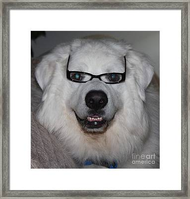 Great Pyrnesse Posing With His New Reading Glasses Framed Print by John Telfer