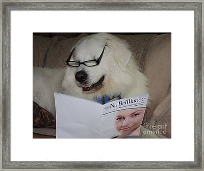 Great Pyrnesse Very Busy Reading Framed Print