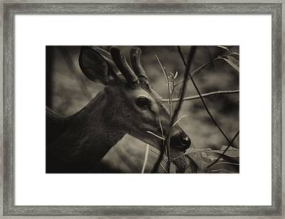 Great Smoky Mountains Framed Print by Jerome Lynch