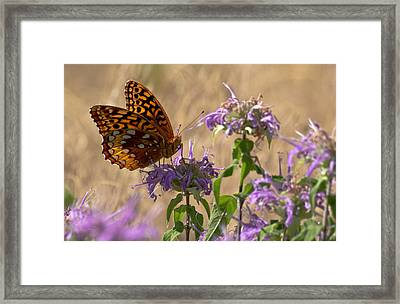 Great Spangled On Bee Balm Framed Print by Shelly Gunderson