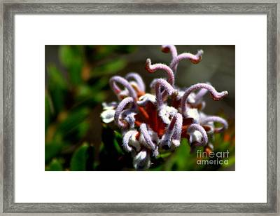 Framed Print featuring the photograph Great Spider Flower by Miroslava Jurcik