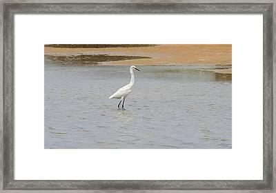 Great White Egret 6 Framed Print