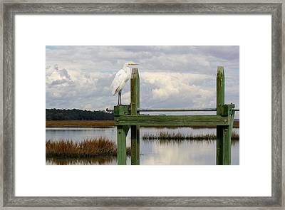 Great White Egret On The Marsh Framed Print by Paulette Thomas