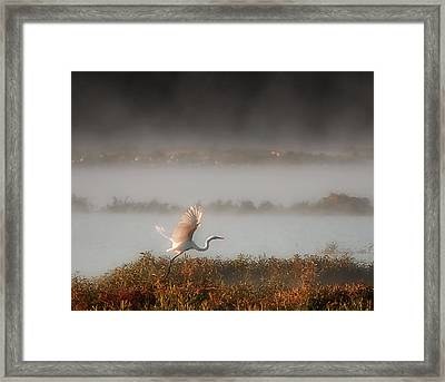 Great White Heron In Morning Mist Framed Print