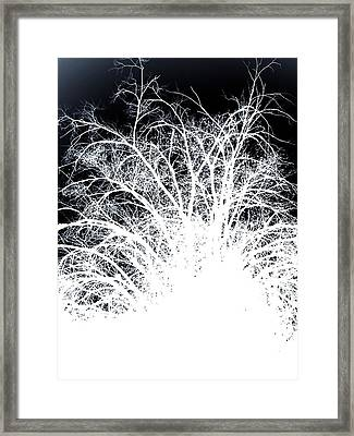 Rami Negativa Framed Print by Micael Pace