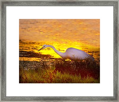 Great White Sunset Framed Print by Mark Andrew Thomas