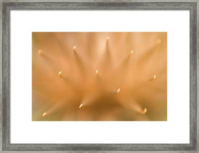 Greater Burdock Seed-head Abstract Framed Print