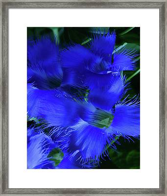Framed Print featuring the photograph Greater Fringed Blue Gentian by Gregory Scott