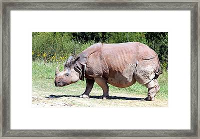Greater One-horned Asian Rhino Framed Print by Laurel Talabere
