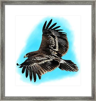 Greater Spotted Eagle Framed Print
