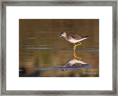 Greater Yellow Legs Framed Print by Ruth Jolly