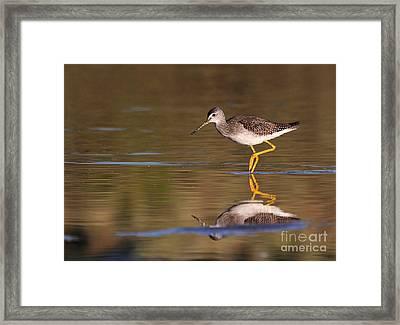 Greater Yellow Legs Framed Print