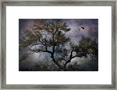 Framed Print featuring the photograph Greatness by Barbara Manis