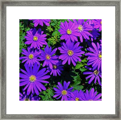 Grecian Wildflowers 2 Framed Print