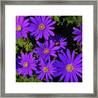 Grecian Wildflowers Framed Print