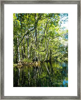 Gree Trees And Water  Framed Print