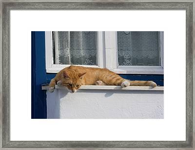 Greece, Mykonos Curious Orange Tabby Framed Print by Jaynes Gallery