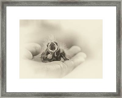 Greed Framed Print by Caitlyn  Grasso