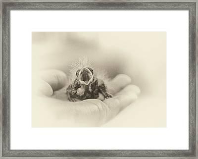 Greed Framed Print