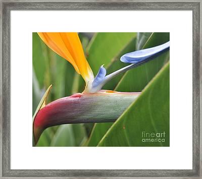 Green 03 Framed Print by Bobby Mandal