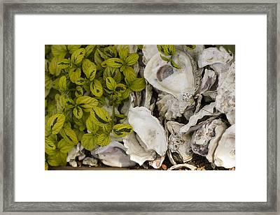 Green Abalone Framed Print