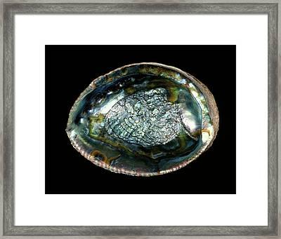 Green Abalone Sea Snail Shell Framed Print by Gilles Mermet