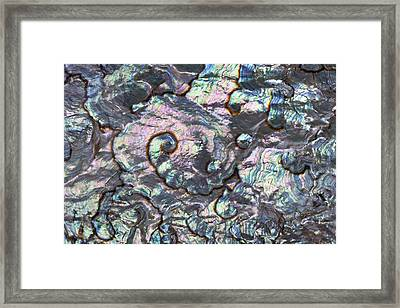 Green Abalone Shell Interior From Baja Framed Print