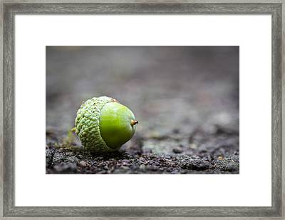 Framed Print featuring the photograph Green Acorn. by Gary Gillette