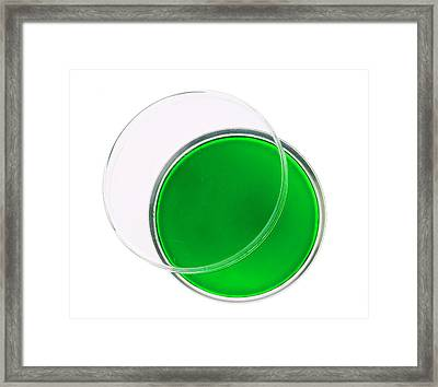 Green Agar Plate Framed Print by Natural History Museum, London